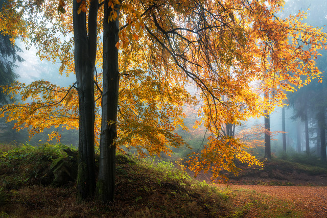 Forest II - Fineart photography by Heiko Gerlicher