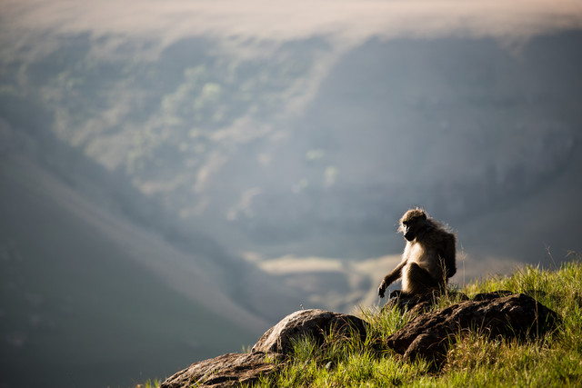 Monkey Pause - Fineart photography by Steffen Rothammel