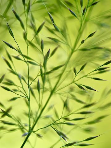 Gras im Sommerwind - Fineart photography by Doris Berlenbach-Schulz