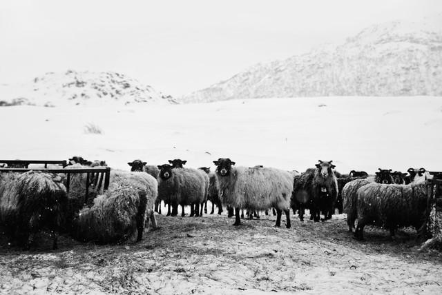 Best friends on Lofoten - Fineart photography by Victoria Knobloch