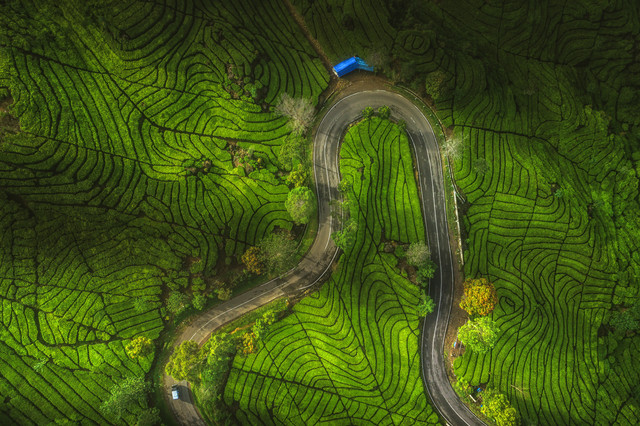 Indonesia Java Ciwidey Tea Plantation - Fineart photography by Jean Claude Castor