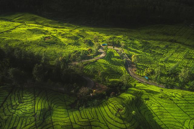 Indonesia Bandung Tea Plantation - Fineart photography by Jean Claude Castor
