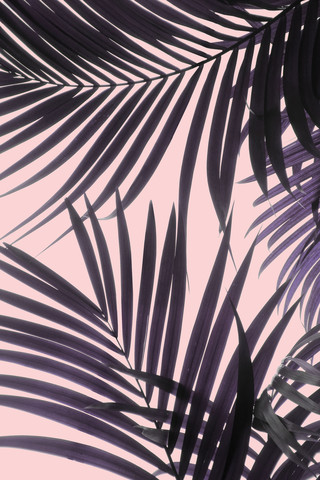 Pink Jungle - Fineart photography by Emanuela Carratoni