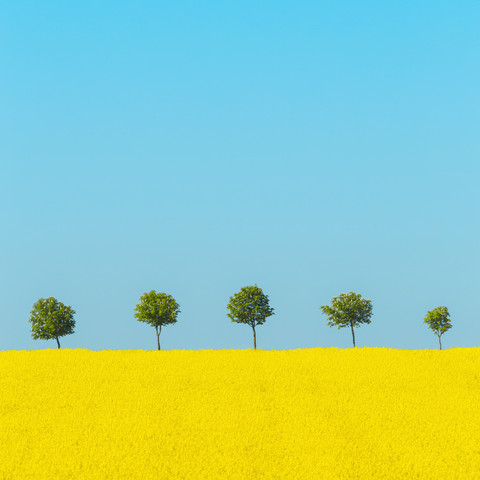 Spring - Fineart photography by Holger Nimtz