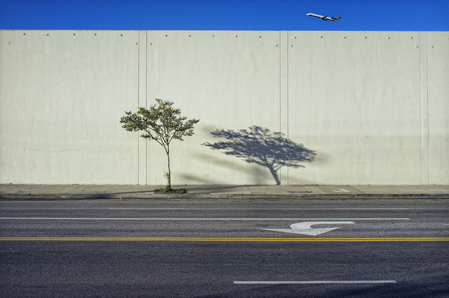 Tree, Shadow, and Plane by Jeff Seltzer