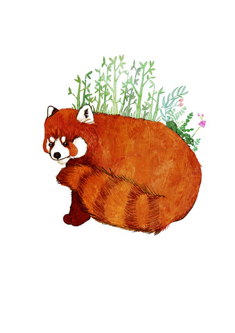 Red Panda - Fineart photography by Katherine Blower