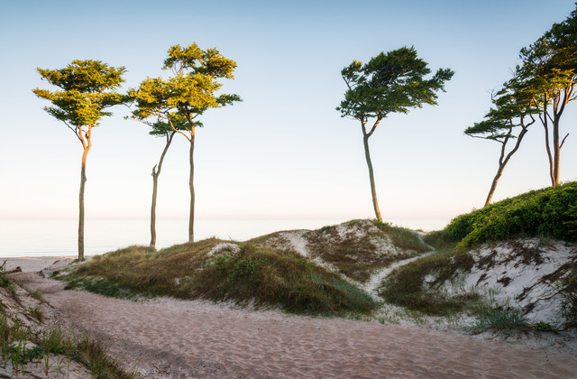 Coastal Trees - Fineart photography by Heiko Gerlicher