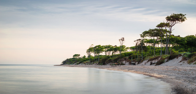 Coastal Forest VII - Fineart photography by Heiko Gerlicher