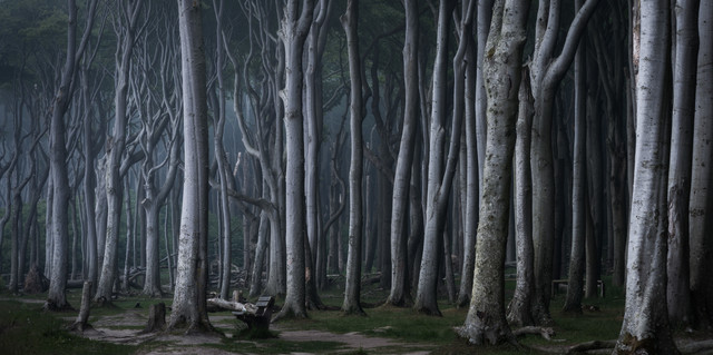 Coastal Forest VI - Fineart photography by Heiko Gerlicher