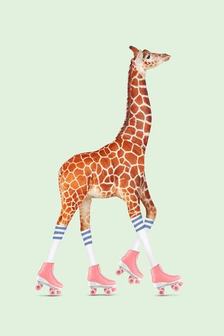 Rollerskating Giraffe - Fineart photography by Jonas Loose