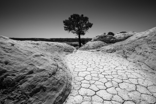 The lonely tree - Fineart photography by Sebastian Worm