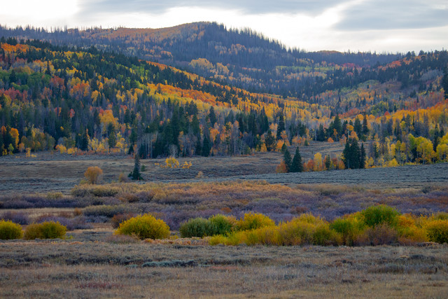 Autumn colours of Colorado - Fineart photography by Martin Rau
