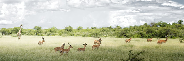 Etosha Nationalpark, Namibia - Fineart photography by Norbert Gräf