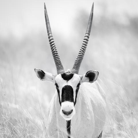 Oryx - Fineart photography by Dennis Wehrmann