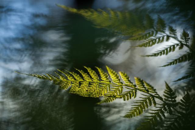 Fern frond - Fineart photography by Sebastian Worm