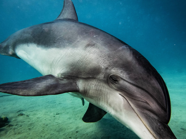 Dolphin - Fineart photography by Eva Lorenbeck