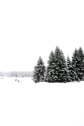 White White Winter 2/2 - Fineart photography by Studio Na.hili