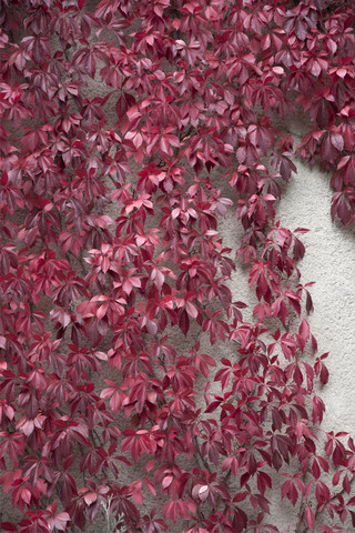 Beauty of Autumn - Fineart photography by Studio Na.hili