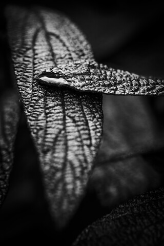 Leaf with drop - Fineart photography by Malte Scherf