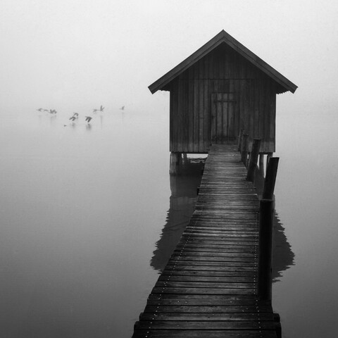 listening to the flapping of wings - Fineart photography by Roswitha Schleicher-Schwarz