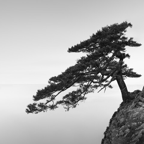 Uradome Tree | Japan - Fineart photography by Ronny Behnert