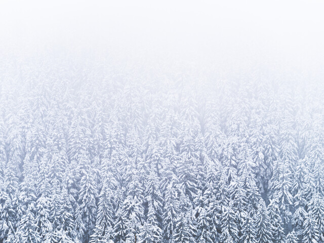 Winter forest - Fineart photography by Felix Wesch