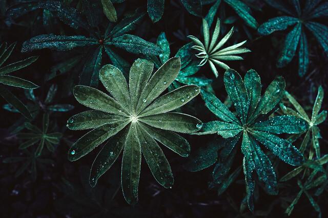 Morning dew - Fineart photography by Sebastian Warneke