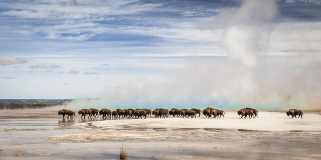 THE BIG MIGRATION - Fineart photography by Andreas Adams