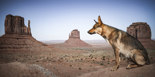 THE WATCHDOG - Fineart photography by Andreas Adams