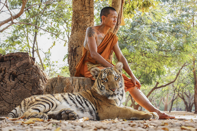 TIGER & MONK - Fineart photography by Andreas Adams