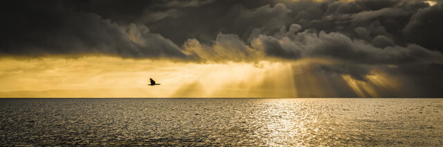 HOMECOMING - Fineart photography by Andreas Adams