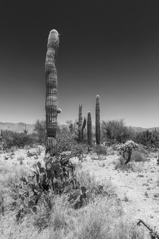 SAGUARO NATIONAL PARK Desert Impression - Fineart photography by Melanie Viola