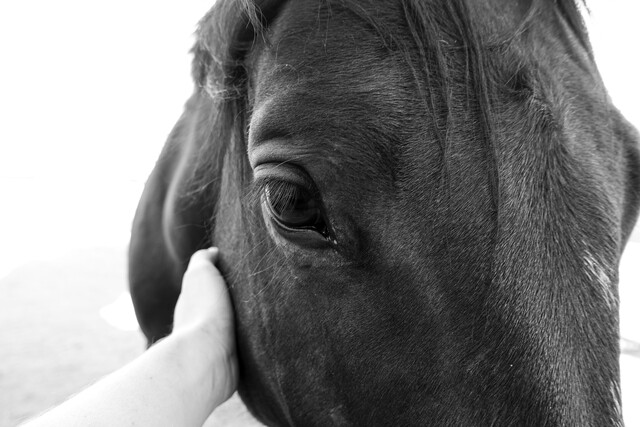 horse's eye - Fineart photography by Kristina Maria Rainer
