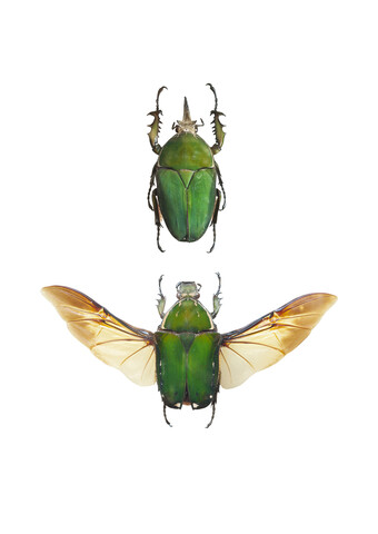 Rarity Cabinet Insect Beetle Green 2 - Fineart photography by Marielle Leenders