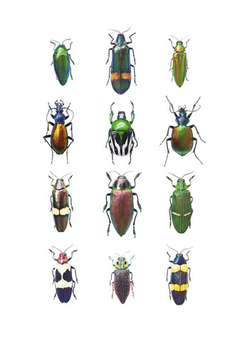 Rarity Cabinet Insect Beetle Mix - Fineart photography by Marielle Leenders