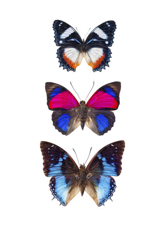 Rarity Cabinet Butterflies 3 - Fineart photography by Marielle Leenders