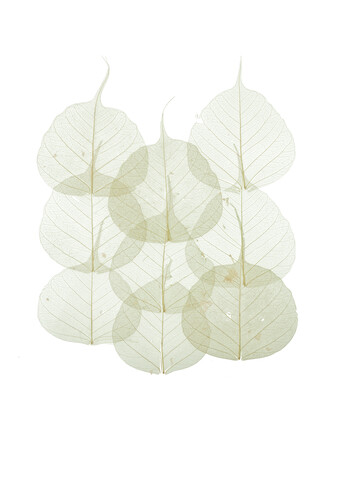 Rarity Cabinet Leaves - Fineart photography by Marielle Leenders