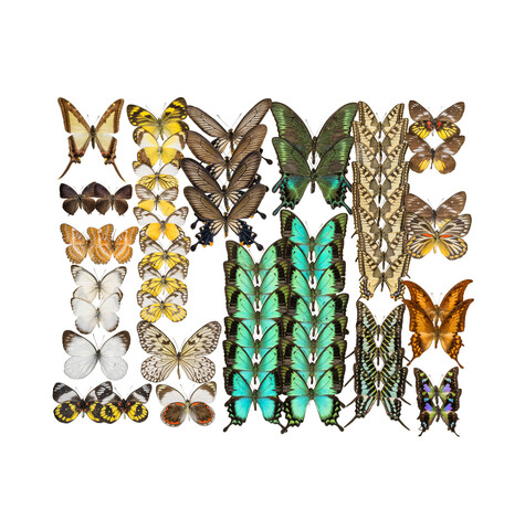 Rarity Cabinet Butterflies Mix 3 - Fineart photography by Marielle Leenders