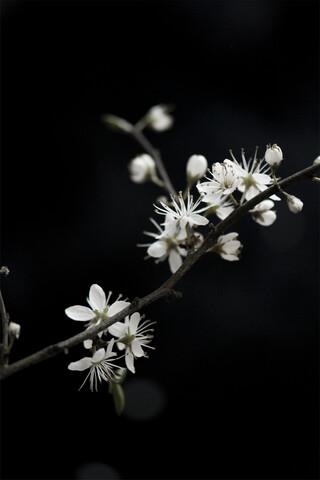 White Loves Black - Fineart photography by Studio Na.hili
