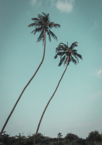 Lonely Twin Palms - Fineart photography by Pascal Genzel