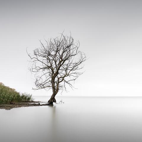 Trasimeno Tree | Umbrien - Fineart photography by Ronny Behnert