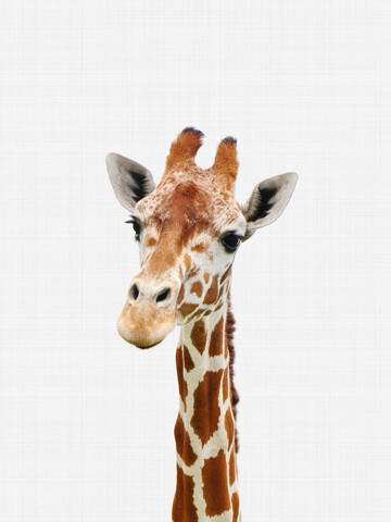 Giraffe - Fineart photography by Vivid Atelier