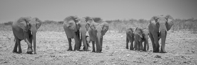 Elephant family Etosha National Park - Fineart photography by Dennis Wehrmann