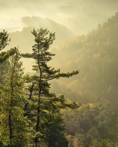 Basteiaussicht im Nebel Elbsandsteingebirge - Fineart photography by Ronny Behnert
