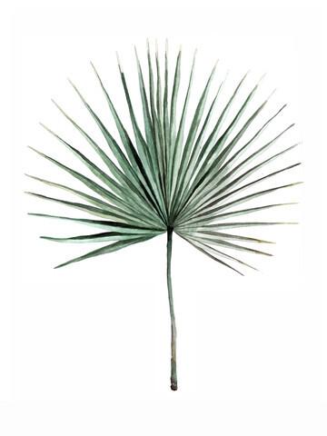 Mantika Botanical Fan palm - Fineart photography by Christina Wolff
