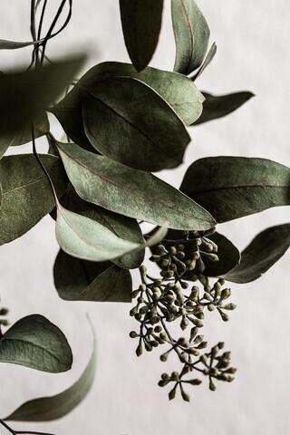 Eucalyptus 10 - Fineart photography by Mareike Böhmer