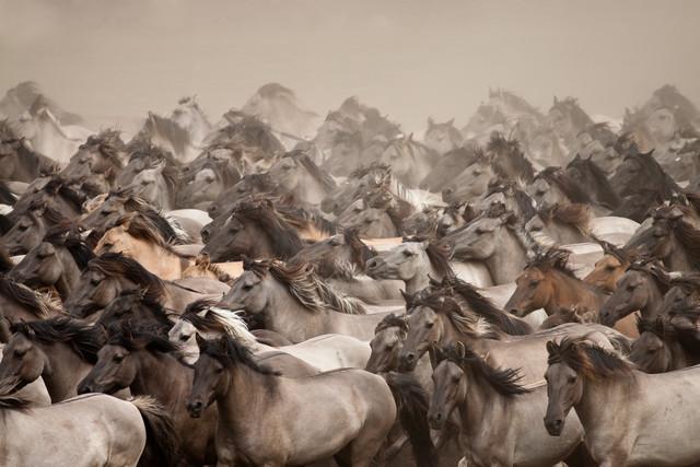 Wild Horses - Fineart photography by Stefanie Lategahn