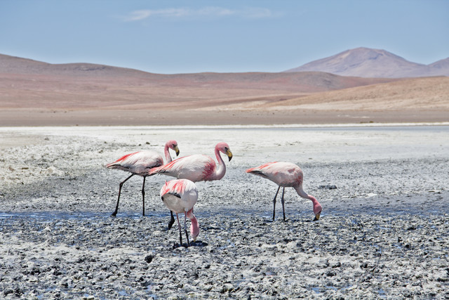 Lagoon Flamingos - Fineart photography by Kay Wiegand