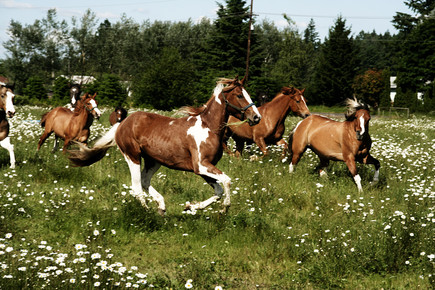 Kevin Russ, Spring Horse Run (United States, North America)