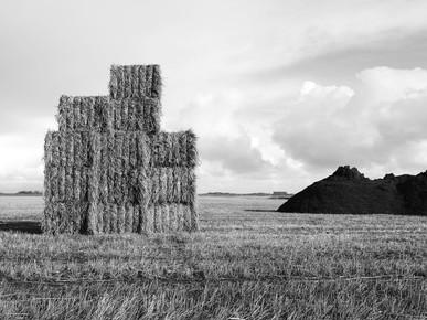Kay Block, hay (Netherlands, Europe)
